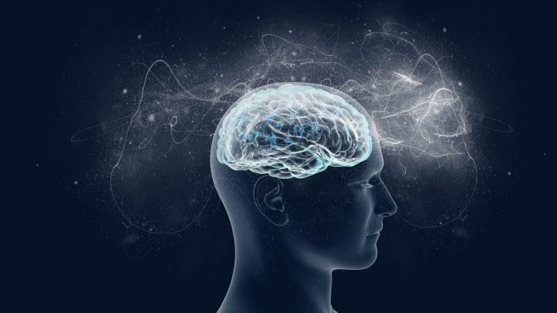 Отдел головного мозга отвечающий за сексуальное возбуждение